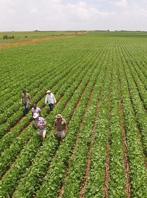 Agrobiotechnology