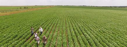 农业生物技术国家重点实验室