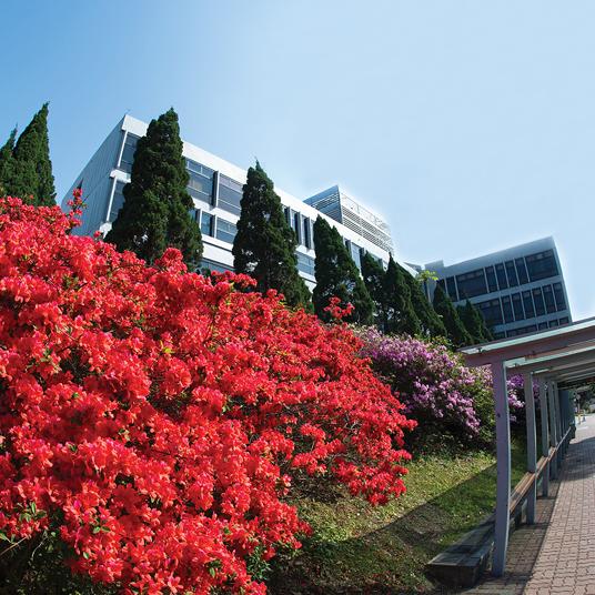 大学行政楼花卉