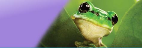 image:frog